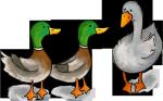 duck-duck-goose